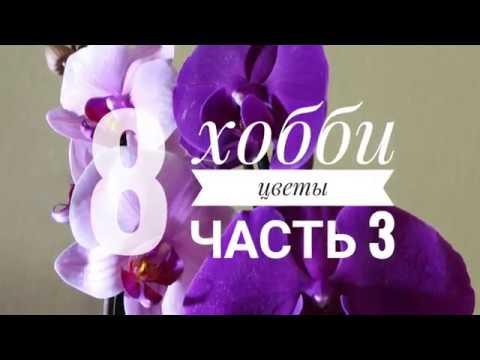 8#3  / Хобби - Цветы / #2 / Как пересадить орхидею самостоятельно