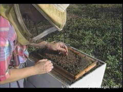Honey lunas para sa mga parasito