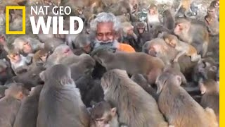 What Not To Do When Interacting With Monkeys | Nat Geo Wild