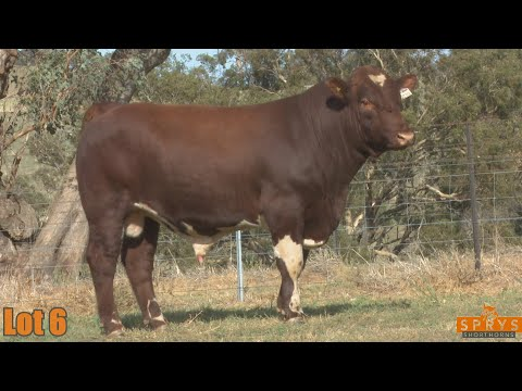 OUTBACK SPRYS BOOM TIME Q270