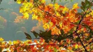 AUTUMN LEAVES STEPHANO GRAPPELLI