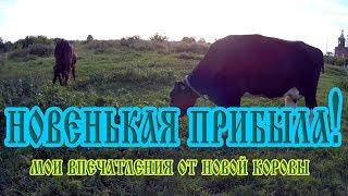 Отчет о покупке новой коровы.Мои волнения и впечатления.агрофирма ТРИО и наши друзья.