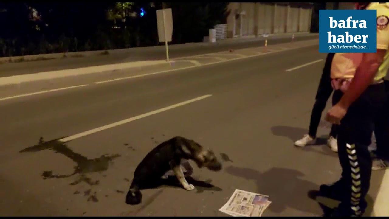 Otomobil Köpeğe Vurup Kaçtı, Yardım İçin Çöp Taksi Geldi!