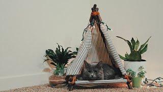 Build A DIY Cat Bed