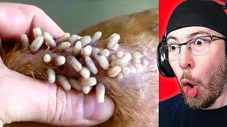 Try NOT to Feel Good Challenge! Satisfying 2019