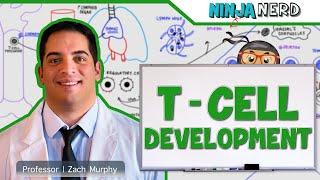 Immunology | T- Cell Development