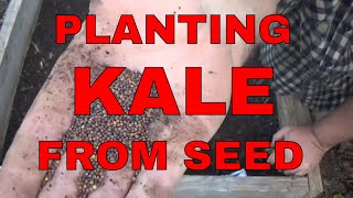 Planting Kale from Seed