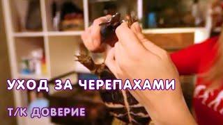 """Передача """"О животных и растениях"""" про черепах"""