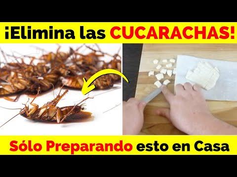 Elimina Las Cucarachas Al Colocar Esta Mezcla En Tu Casa