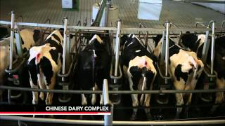 Could a Surplus of California Milk Fulfill China's Needs?