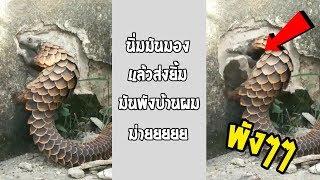 เมื่อโปเกม่อนมาพังบ้าน ควรทำไงกับมันดี...#รวมคลิปฮาพากย์ไทย