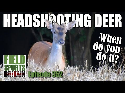 Fieldsports Britain – Headshooting Deer – when do you do it?