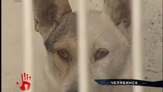 Неужели в челябинском ветприемнике придется усыпить около 200 собак и кошек.