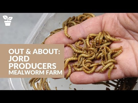 , title : 'Out & About with Jord Producers:  Commercial Mealworm Farm