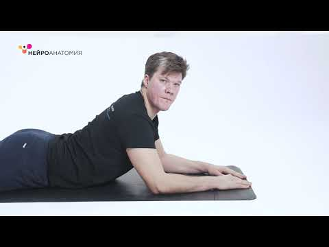 Профилактика туннельных синдромов — Упражнения