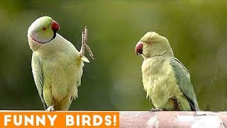 Funny Parrot & Bird Videos Weekly Compilation December 2018 | Funny Pet Videos