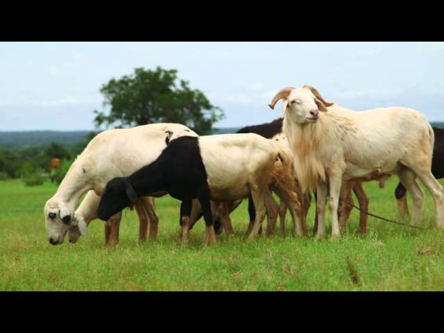 Common Pastures: Farmer-to-Farmer Technical Support and Training