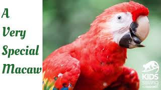 Bouche the Scarlet Macaw