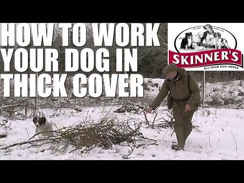 Gundog training tips – How to work your dog in thick cover