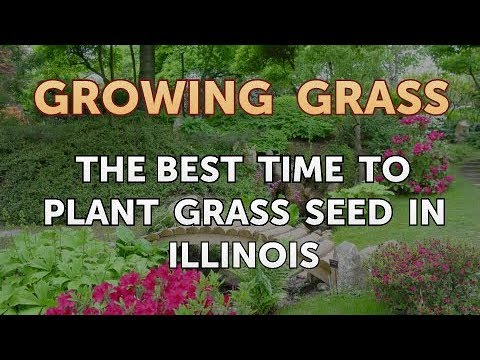 , title : 'The Best Time to Plant Grass Seed in Illinois