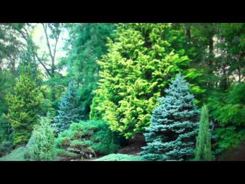 Dabney Nursery - Trees, Trees For Sale, Ornamental Trees