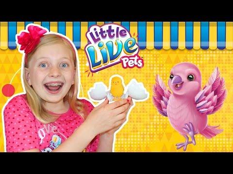 Little Live Pets Surprise Hatching Chick Eggs!!