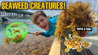 CATCHING *EXOTIC* CREATURES HIDING in SEAWEED!!