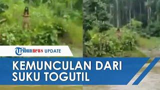 Viral Video Suku Togutil Muncul dan Memanah Warga yang Hendak Menyeberangi Sungai di Hutan Halmahera