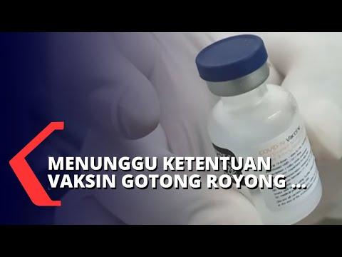 Vaksin Mandiri, Pemerintah Tunggu Hasil Pertemuan Bio Farma, BUMN dan Swasta