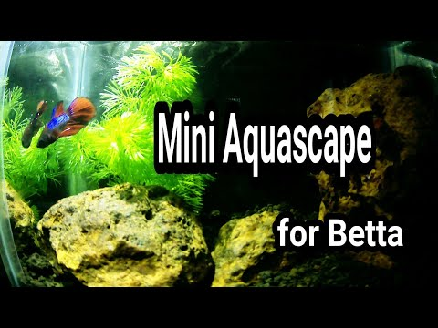 Aquascape# DIY Mini Aquascape for Betta Fish