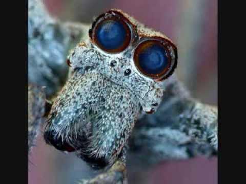 Video of PestPro The Bug Identifier