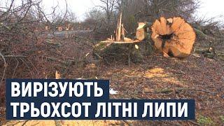 В Хмельницкой области срезают трехсотлетние липы: законно ли?