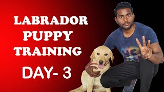 Labrador Puppy Training - Day 3 | Train Your Puppy Sit & Shake Hand in Hindi | ALEXA THE LABRADOR