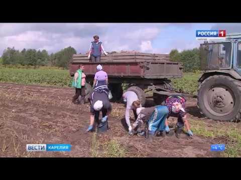 Доплату к пенсии в Карелии получат 800 бывших работников сельского хозяйства