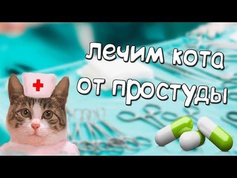Простуда у котов. Что делать?