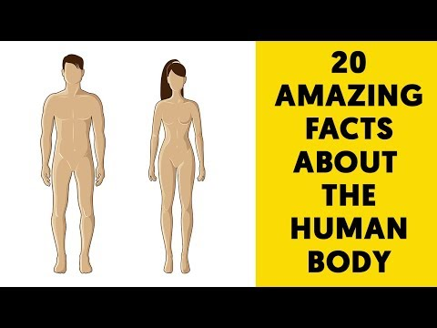 amazing facts about heavenly bodies Our bodies are amazing things although this site has listed some fascinating facts about our bodies before, one list just doesn't cover it all i'm not sure a hundred lists would do it so, here are another 10 interesting facts about your body enjoy.