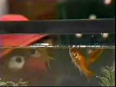 Ernie and Bert watch goldfish - Classic Sesame Street