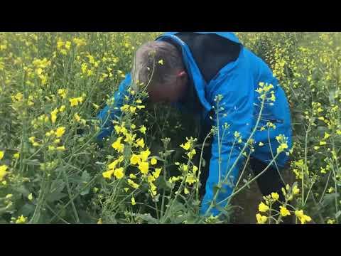 Follow the Crop video
