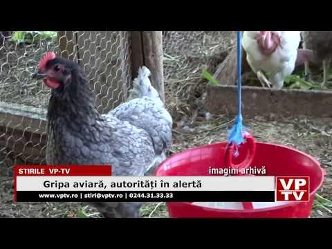 Gripa aviară, autorități în alertă