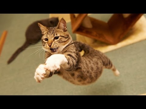 Epic Funny Cats Jump Fail 2015
