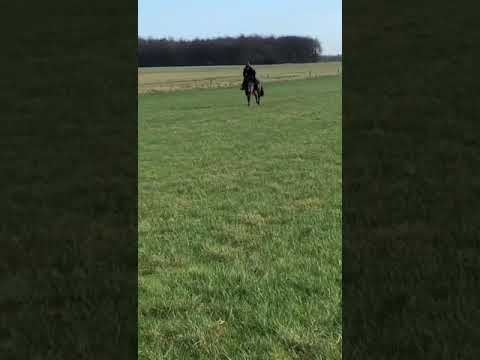 Liberty Breeze on the grass gallops for the 1st time in 2021, with Deam Mckeown aboard.