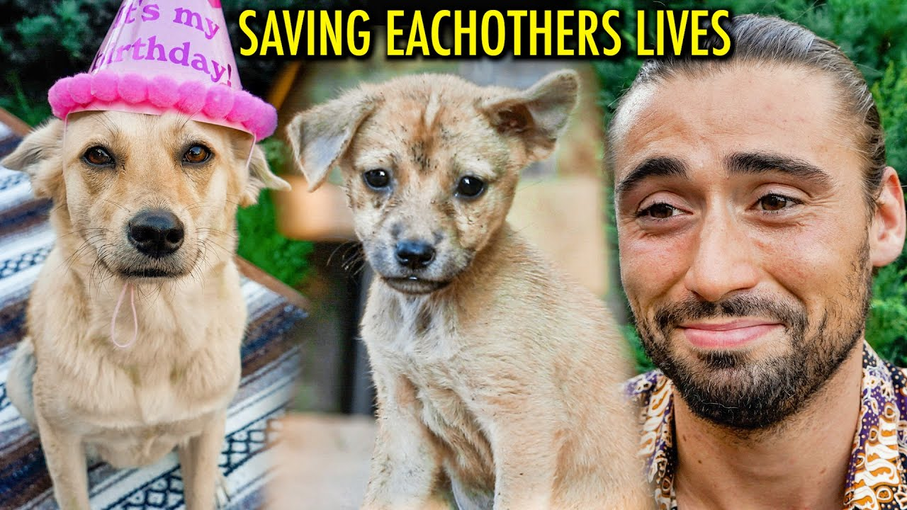 Bret Maverick – The Homeless Street Dog That Changed My Life Forever (The Real Story)