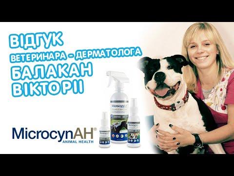 Кожные Заболевания У Собак и Котов | Ветеринарный врач рекомендует средство для лечения дерматитов