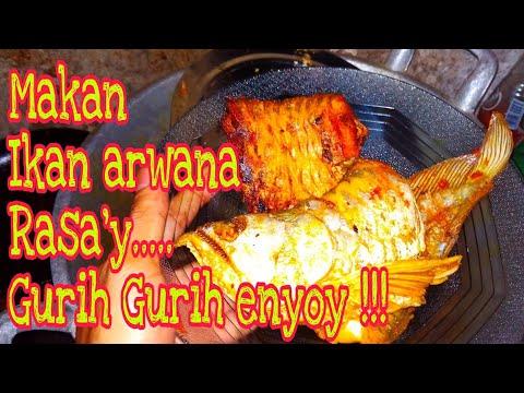 Makan Ikan Arwana Kaskus