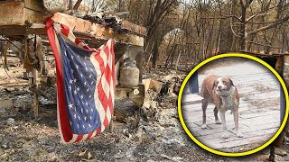 Dog Left Behind Waited Weeks For Owners To Return To Home Burned By Camp Fire