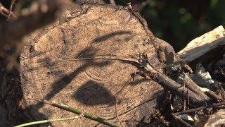 Сюжет ТСН24: Ефремовцы, проживающие в бараках, недовольны качеством дров для отопления