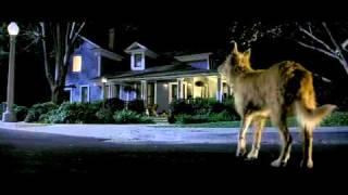 Cursed (2005) Video