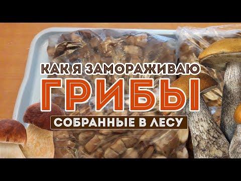 Как заморозить грибы на зиму! Пошаговая инструкция