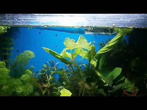 """О некоторых """"секретах"""" выращивания растений в аквариумах."""