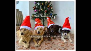 preview picture of video 'nirpal dog Christmas'